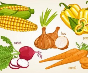 Fresh vegetables with name vector illustration 05