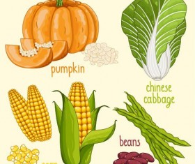 Fresh vegetables with name vector illustration 08