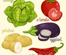 Fresh vegetables with name vector illustration 10