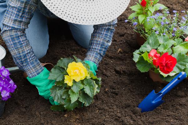Gardener planting various flowers Stock Photo 01