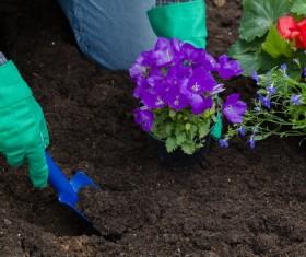 Gardener planting various flowers Stock Photo 02