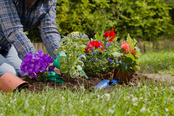 Gardener planting various flowers Stock Photo 05