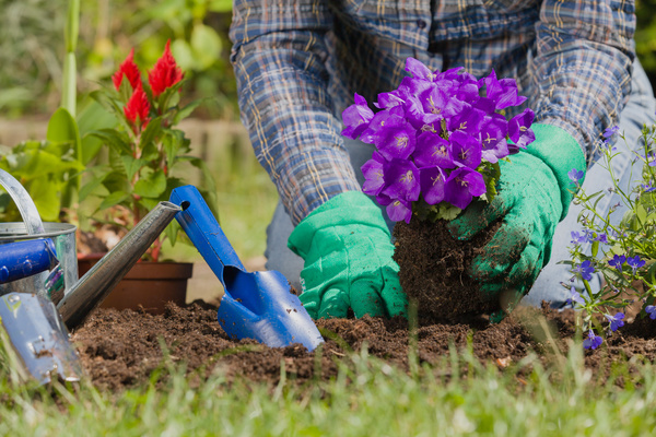 Gardener planting various flowers Stock Photo 07