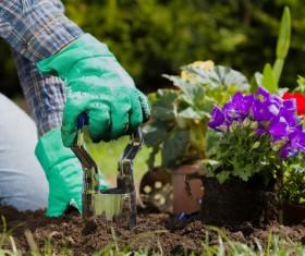 Gardener planting various flowers Stock Photo 09