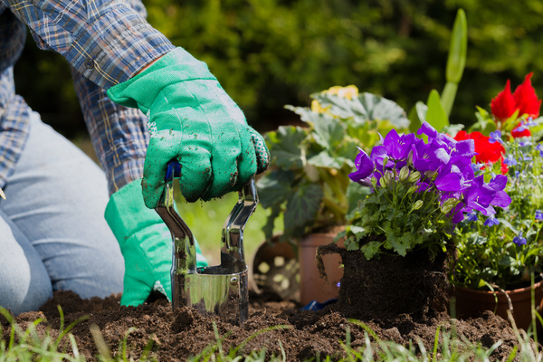 Gardener planting various flowers Stock Photo 09