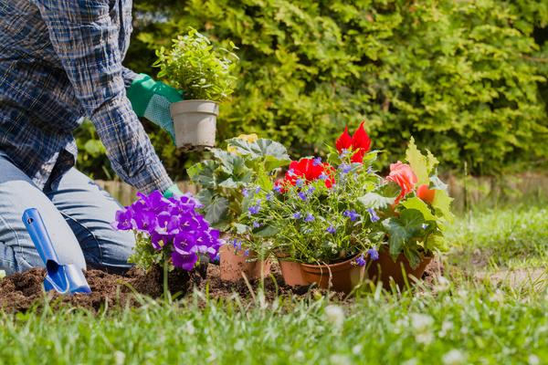 Gardener planting various flowers Stock Photo 10