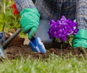 Gardener planting various flowers Stock Photo 11