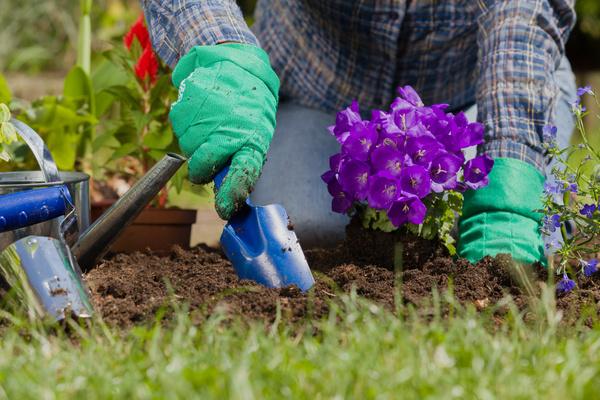 Gardener planting various flowers Stock Photo 11