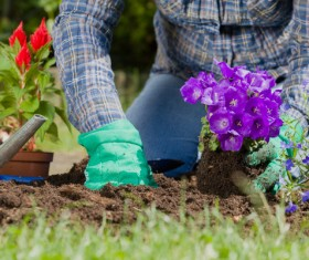 Gardener planting various flowers Stock Photo 12