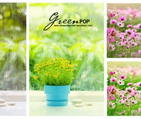 Green POP Photoshop Action