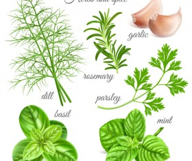 Herbs with spice vector