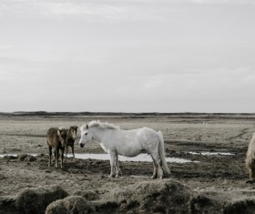 Horses on wide farmland Stock Photo