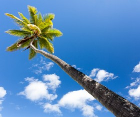 Island Palm Stock Photo 01