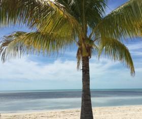 Island Palm Stock Photo 02