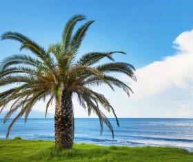 Island Palm Stock Photo 03