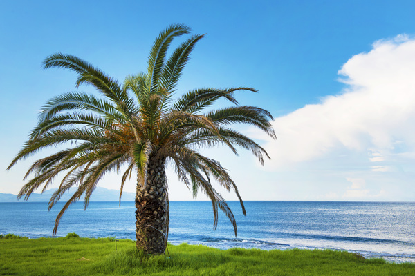 Island Palm Stock Photo 03
