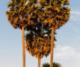 Island Palm Stock Photo 04