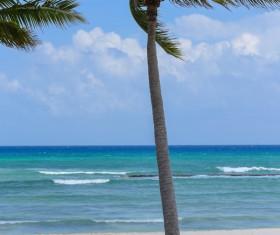 Island Palm Stock Photo 05