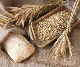Italian ciabatta bread and wheat Stock Photo