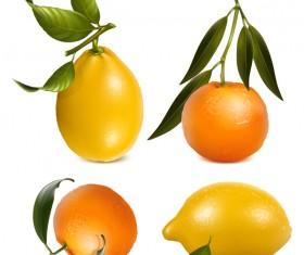 Lemon with citrus vector