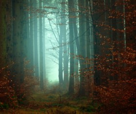 Mysterious trees forest scene Stock Photo