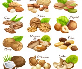 Nut with nut name vector set