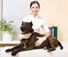 Pet doctor Stock Photo 03