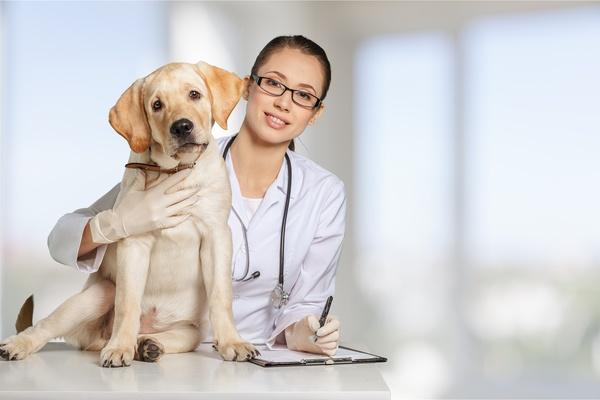 Free Pet Doctor