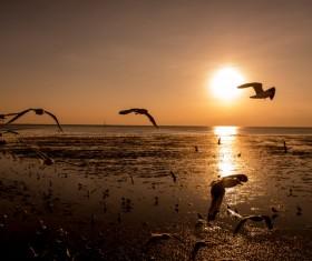 Photograph beautiful sunset Stock Photo 15