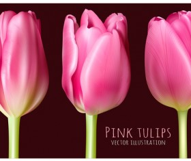 Pink tulips illustration vector
