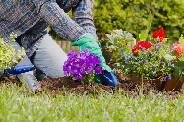 Planting flowers in the garden home Stock Photo 02