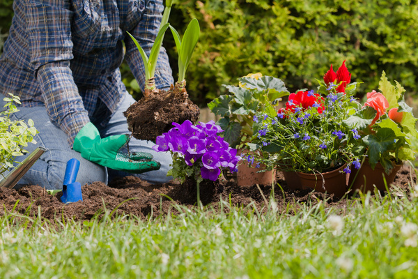 Planting flowers in the garden home Stock Photo 03
