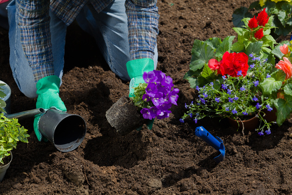 Planting flowers in the garden home Stock Photo 04