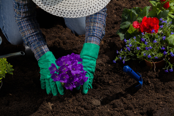 Planting flowers in the garden home Stock Photo 05