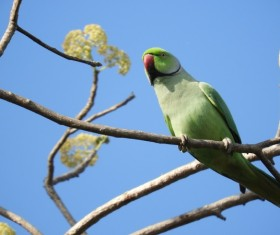 Pretty green parrot on the branch Stock Photo
