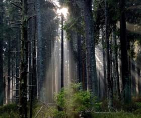 Sun rays in jungle scene Stock Photo