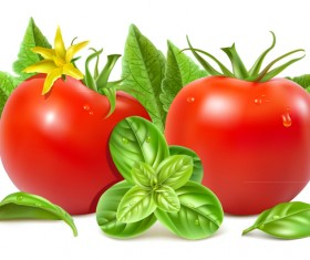 Tomato with green leaves vector