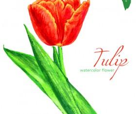 Watercolor tulip flower vectors 01