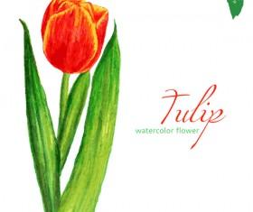 Watercolor tulip flower vectors 02