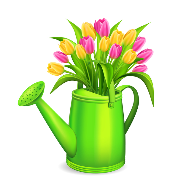 Watering with tulips and white background vector 01