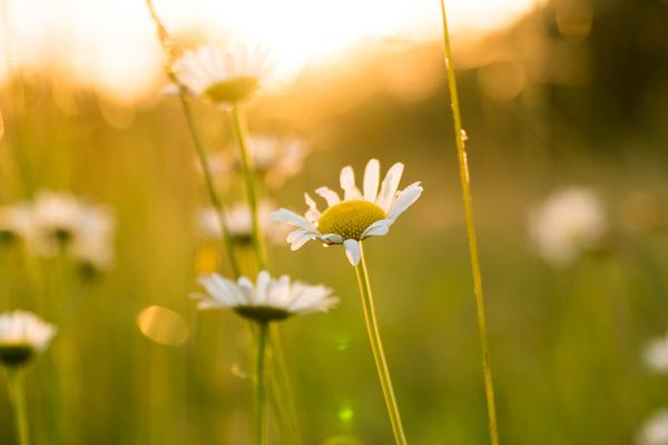 Wild flowers in the sun Stock Photo