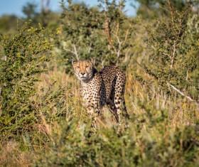 Wild leopard in the jungle Stock Photo