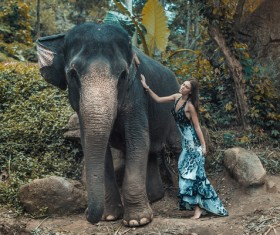 Woman and elephant live in harmony Stock Photo 04