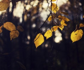 Yellow leaves on branch in autumn Stock Photo