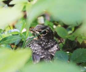 cute newborn bird in nature Stock Photo