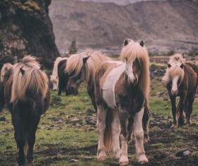 horses on highland Stock Photo
