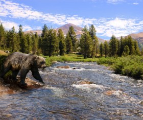A bear trying to wading Stock Photo