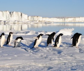 Antarctic penguin walking on snow surface Stock Photo