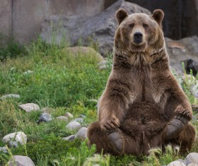 Bear sitting in the rubble of the grass Stock Photo