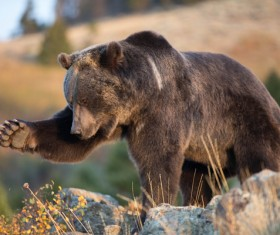 Black bears who are interested in plants Stock Photo